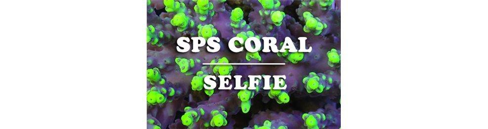 SPS Korallen (WYSIWYG)