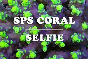 Korallen (WYSIWYG)