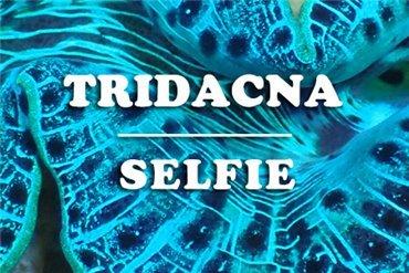 Tridacna (WYSIWYG)
