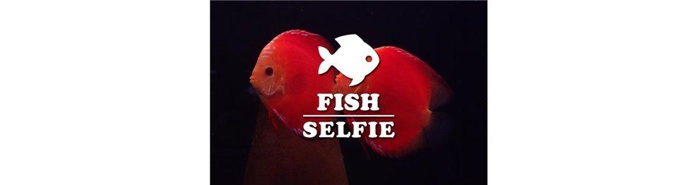 Diskusfische (WYSIWYG)